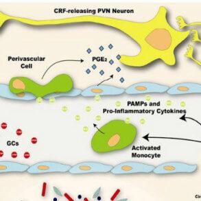 Brain Immune signaling cover