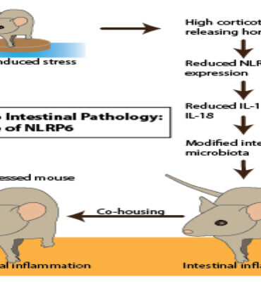 CRH stress enteritis