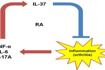 IL-37 and arthritis