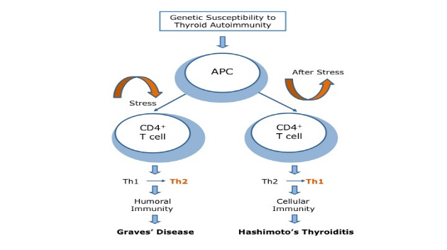 Stress-Induced Th2 Shift and Thyroid by Tsatsoulis