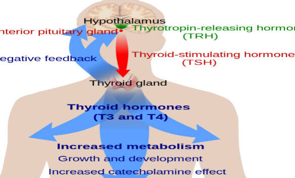Thyroid and stress