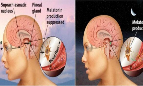 Melatonin and Th17 cells