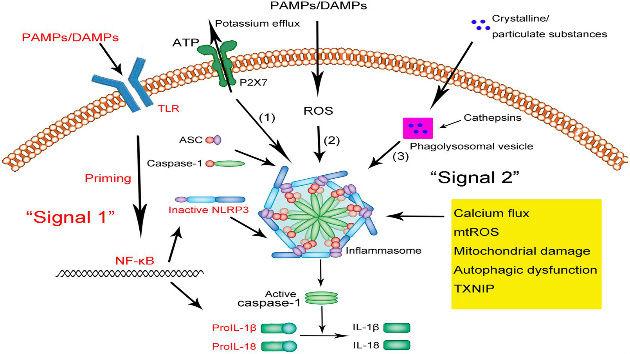 ATP P2X7R Inflammasome