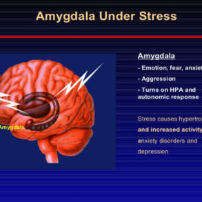 stress amygdala