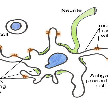 cover nervous system relationship immune events