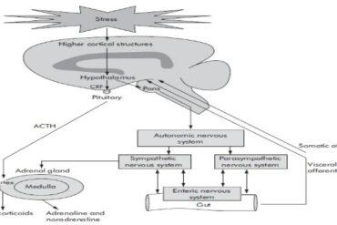 Stress neutrophil infiltration experimental colitis