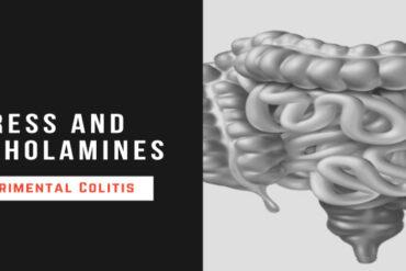 stress catecholamines experimental colitis