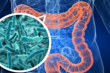 Gut Bacteria Rheumatoid Arthritis