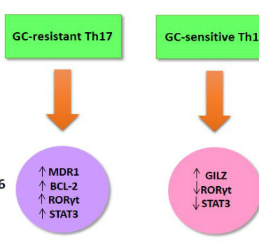 Pro-inflammatory Th17 Cells Glucocorticoid Resistance Cover