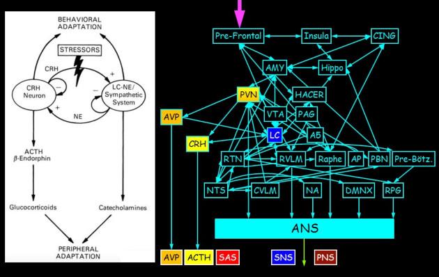 Stress, dyshomeostasis COVID-19 mortality cover