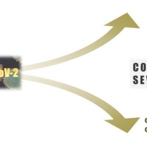 Key Factors that Drive COVID-19 Severity