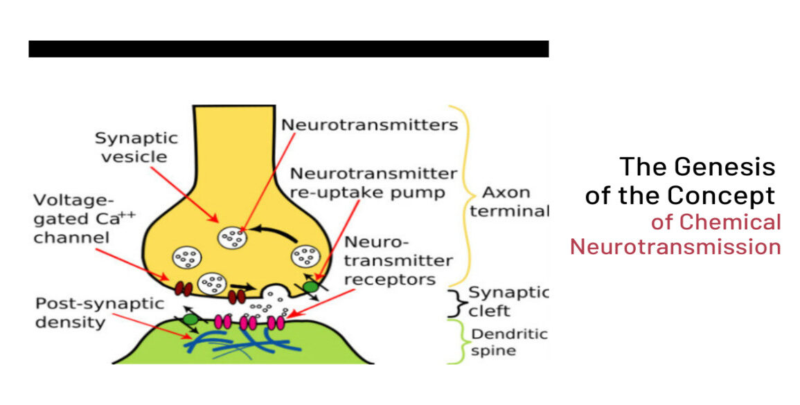 The Genesis of the Concept of Chemical Neurotransmission