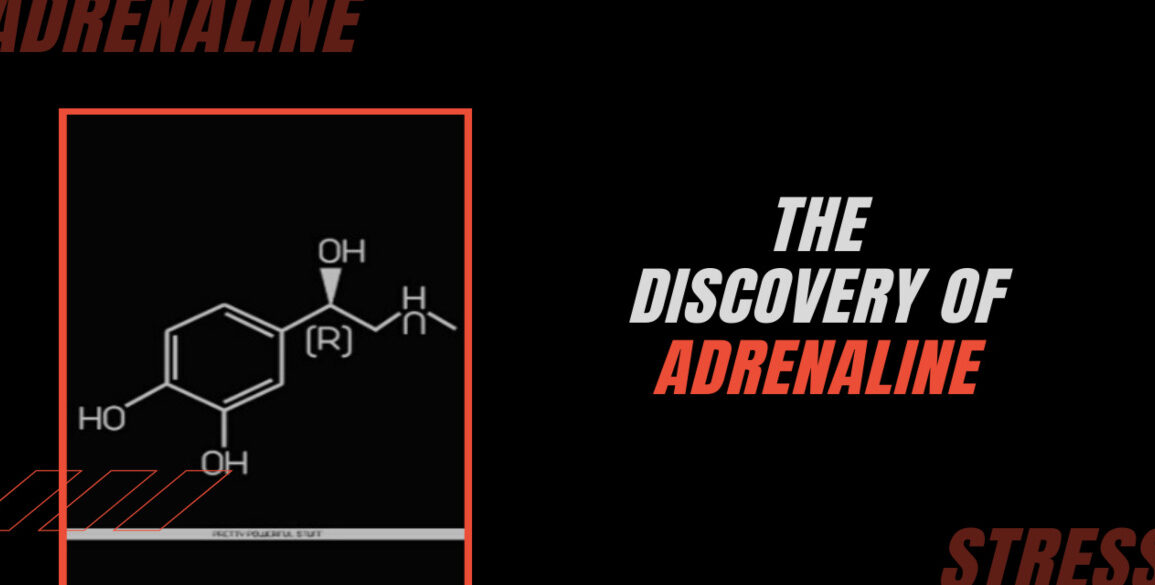 the discovery of adrenaline