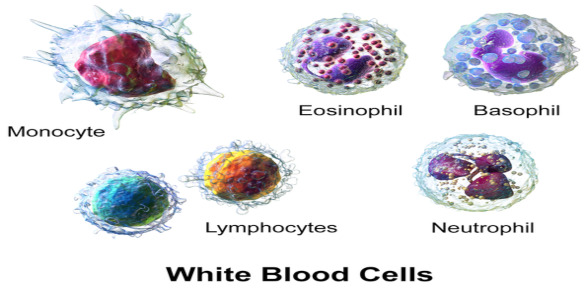 Autonomic Nervous System Control of Leukocyte Distribution