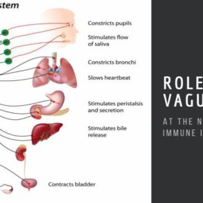 Role of the Vagus Nerve at the Neural-Immune Interface