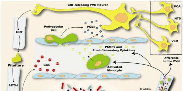 brain-immune signaling