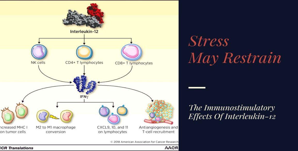 Stress May Restrain Immunostimulatory Effects Interleukin-12