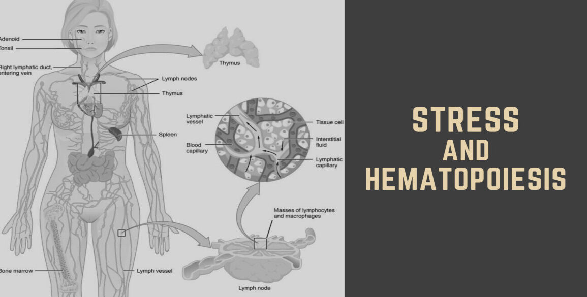 Stress Mediators Affect Hematopoiesis