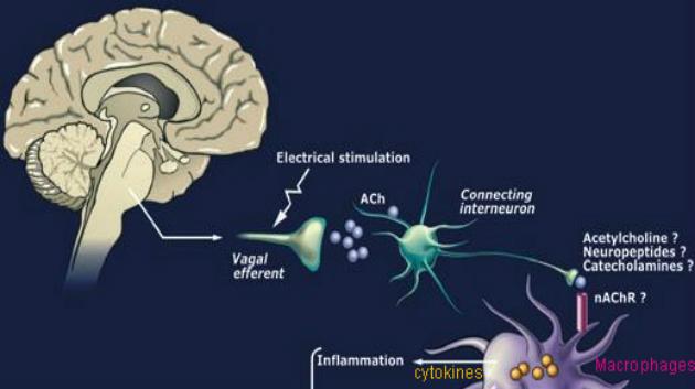 vagus nerve and arthritis