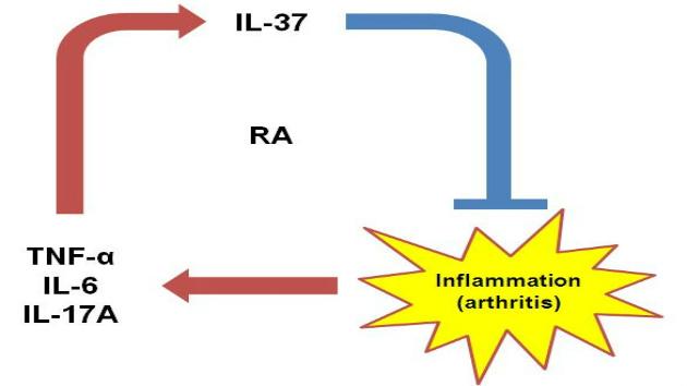 New Anti-Inflammatory Cytokine IL-37 Are Increased In Rheumatoid Arthritis