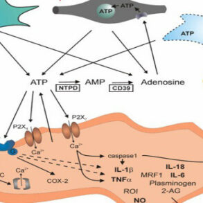 ATP as neuromediator figure