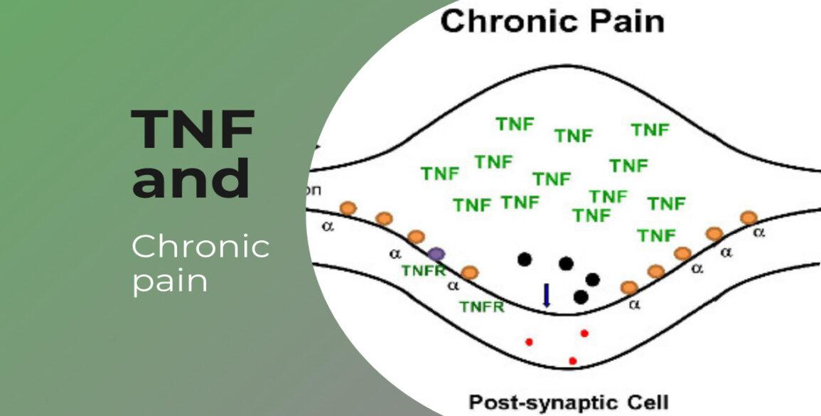 Brain TNF Homeostasis & Chronic Pain