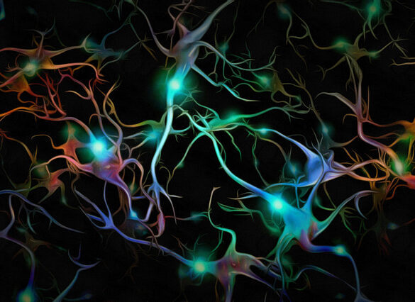 Neuroinflammation Alzheimer's Disease