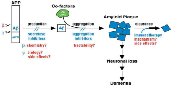 Aducanumab Shows Promise in Reducing Alzheimer's Amyloid-β Plaques