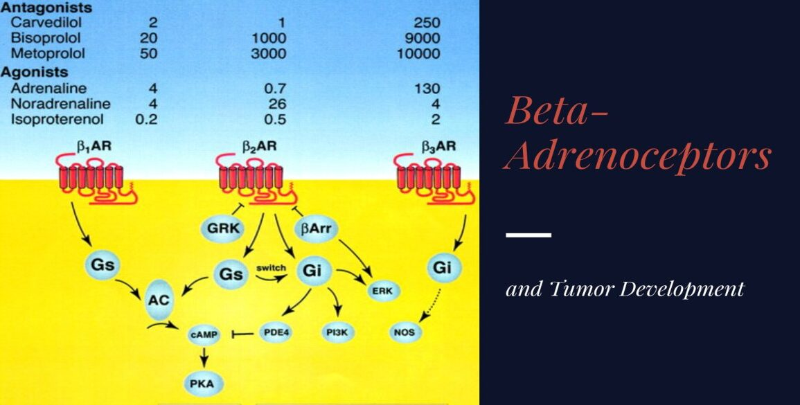 Beta-Adrenoceptors and Tumor Development