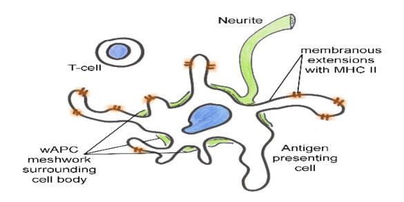 Nervous System Relationship