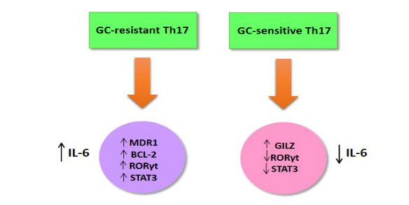 Pro-Inflammatory Th17 Cells and Glucocorticoid Resistance