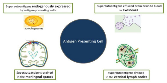 Brain Superautoantigens