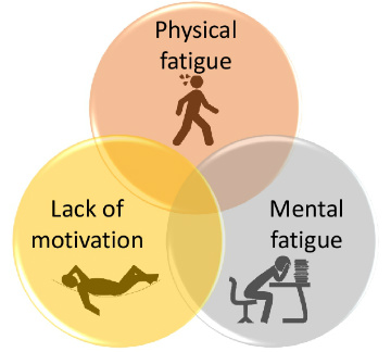Role Inflammation Fatigue Figure 1