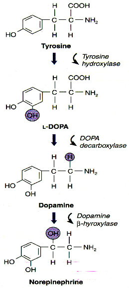 Cross-talk dopamine and innate immunity figure 1