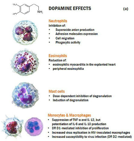 Cross-talk dopamine and innate immunity figure 3a