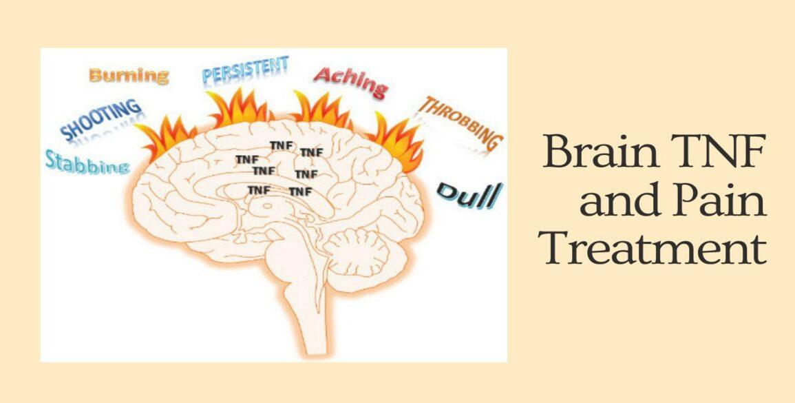 Level of Brain TNF