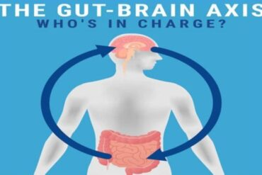 production neuropeptides gut microbiota