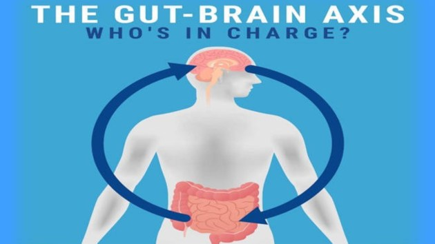 production neuropeptides gut microbiota