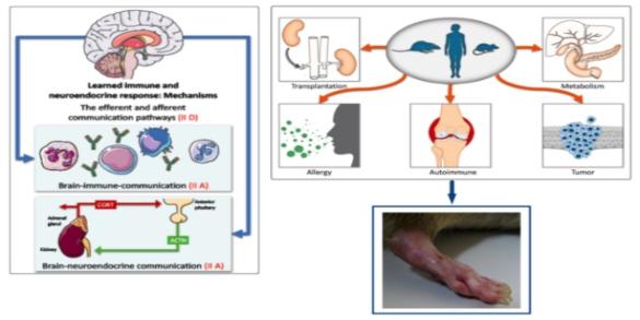 teach the T cells immunosuppressive placebo arthritis