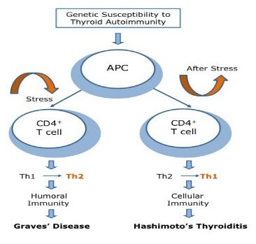 Stress Induced Th2 Shift Thyroid